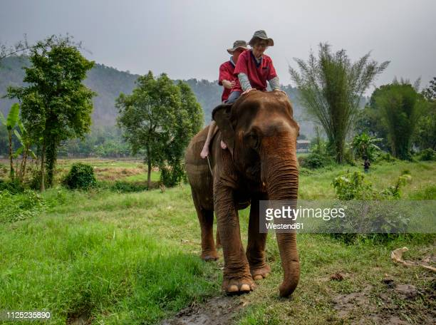 thailand, chiang mai province, ran tong elephant sanctuary, elephant trekking - white elephant stock photos and pictures