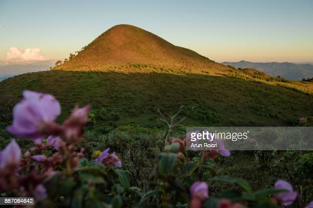 Thailand - Doi Pui Luang - Mae Ngao National Park - Flowering landscape and the peak in the background.
