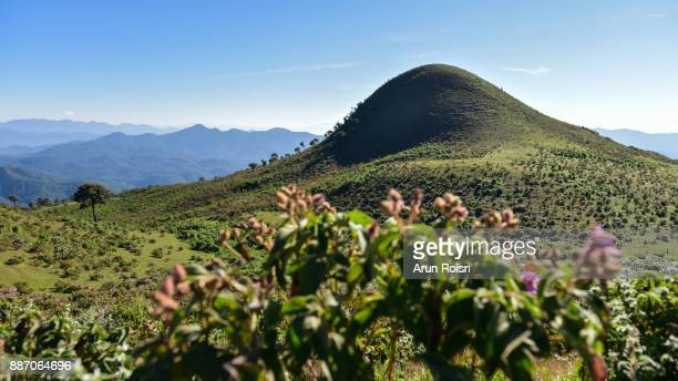 Thailand - Doi Pui Luang - Mae Ngao National Park - Flowering landscape and the summit point in the background.