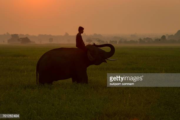 Thailand Elephant and man people silhouette