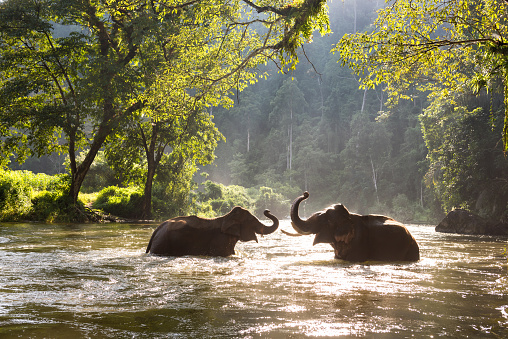 Thailand elephant in the river 618180000