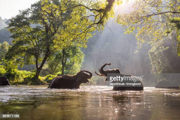 thailand elephant - animals in the wild stock pictures, royalty-free photos & images