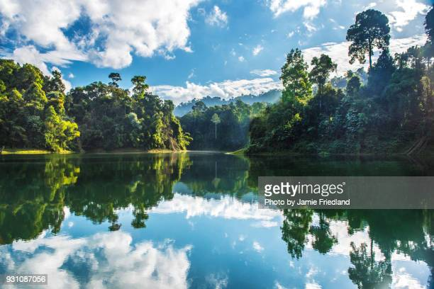 thailand forest lake - kao sok national park stock pictures, royalty-free photos & images