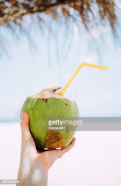 thailand, koh lanta, woman's hand holding fresh coconut - coconut water stock pictures, royalty-free photos & images