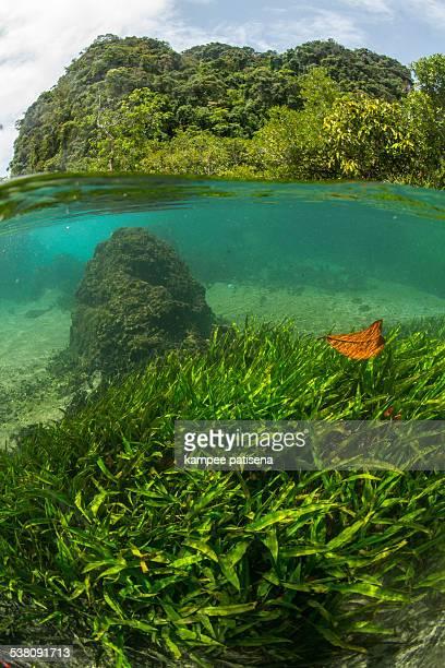 Thailand, Krabi, Tha Pom, mangrove swamp