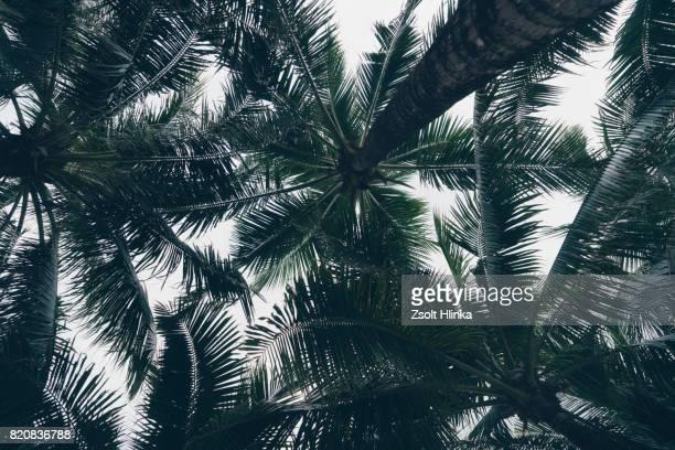 Thailand palms