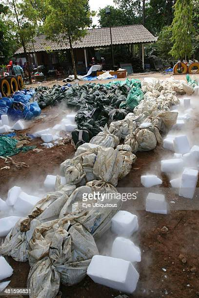 Thailand Phang Nga District Takua PA Tsunami Dry ice blocks lay around the bodies to try and preserve them to ID but with the huge number of deaths...