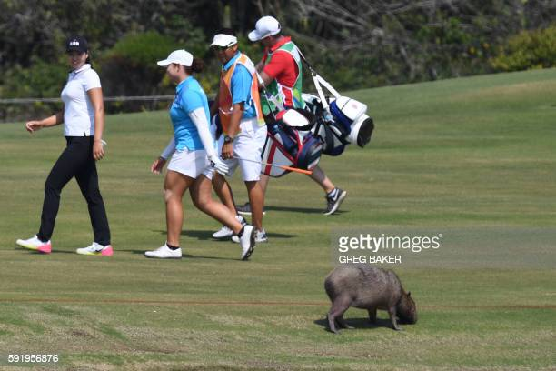 Thailand's Ariya Jutanugarn and South Korea's Chun Ingee walk past a Capybara in the Women's individual stroke play at the Olympic Golf course during...