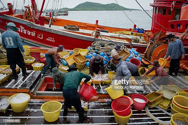 STORY 'ThailandtraffickingrightsMyanmarCambodiaFEATURE' by Kelly Macnamara Photo taken on September 1 2011 shows migrant laborers sorting fish as...