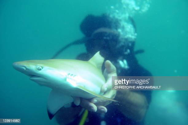 ThailandwildlifetourismsharkFEATURE by Didier LAURAS In this picture taken on September 3 an environmental activist releases a baby blacktip shark...
