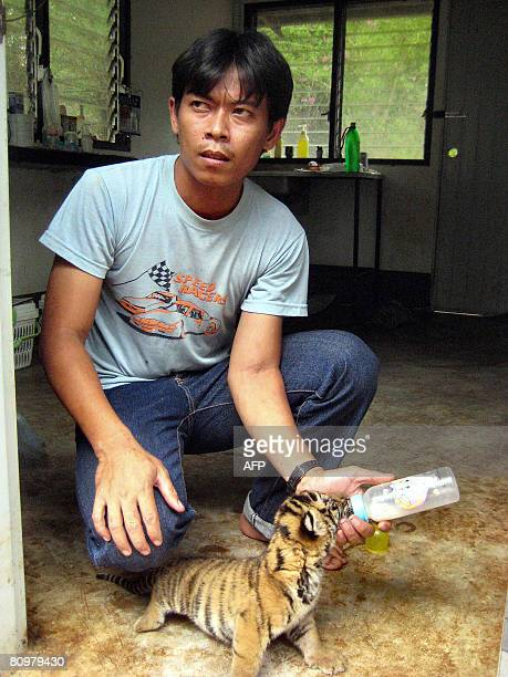 ThailandwildlifetraffickingFEATURE by Elizabeth Gibson Animal keeper Somchay Ropsong feeds a 17dayold baby tiger at a conservation and breeding...