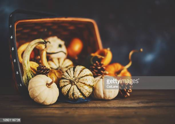 thanksgiving arrangement with pumpkin variety in basket - thanksgiving cat stock pictures, royalty-free photos & images