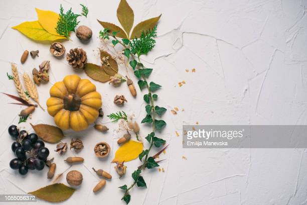 thanksgiving background. autumn season - thanksgiving background stock photos and pictures
