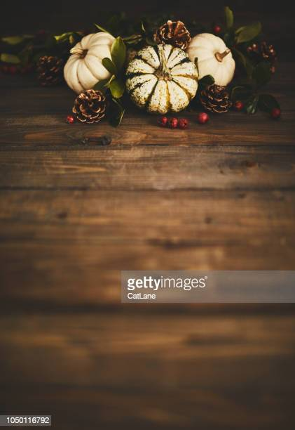 thanksgiving background with pumpkin variety and berries - thanksgiving cat stock pictures, royalty-free photos & images