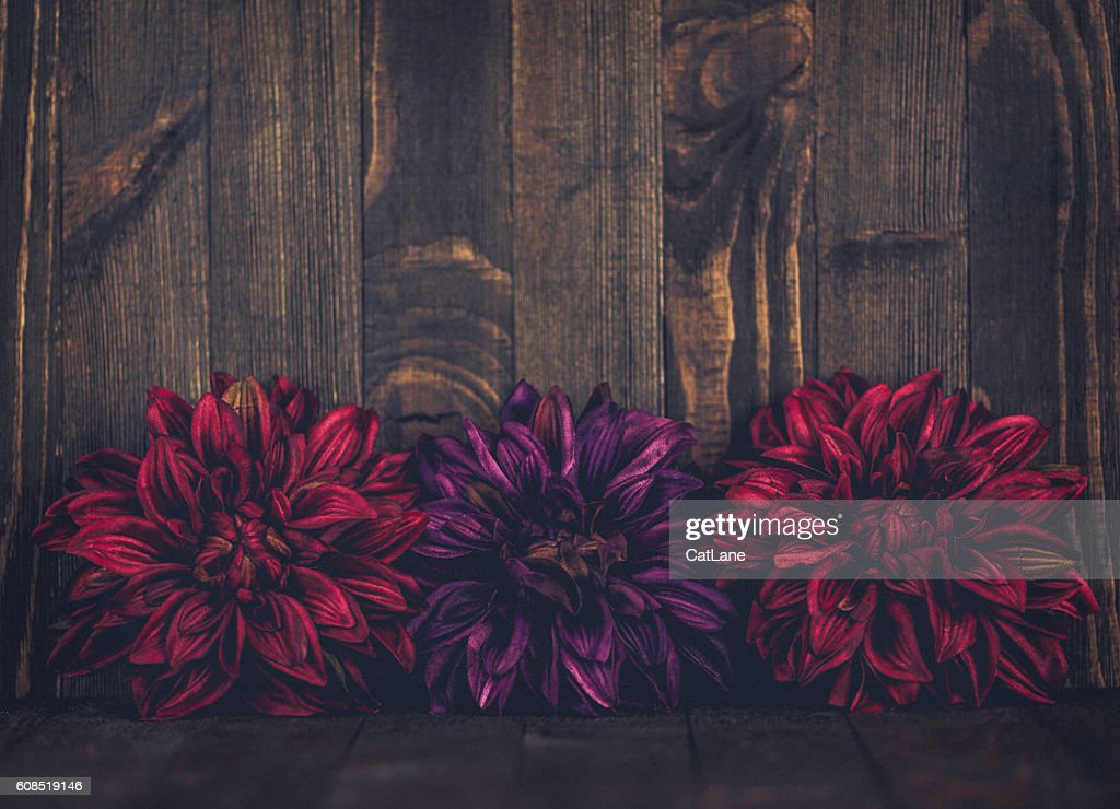 Thanksgiving Fall Background With Vibrant Flower Border Against Rustic Wood Stock Photo