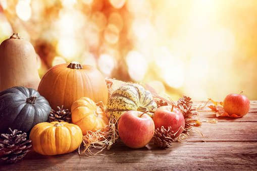 Thanksgiving, fall or autumn greeting background with pumpkin 1037609284