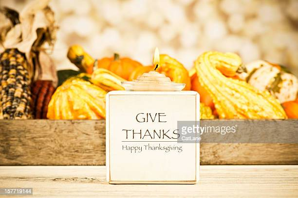 thanksgiving message: give thanks - thanksgiving cat stock pictures, royalty-free photos & images