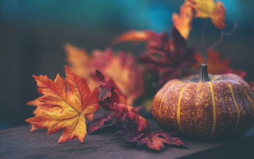 Thanksgiving or Halloween Still Life Background with Pumpkin and Leaves 1166318945