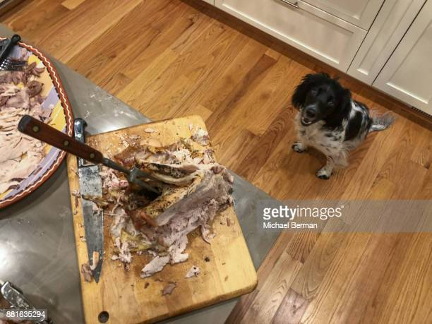 thanksgiving - thanksgiving dog stock photos and pictures