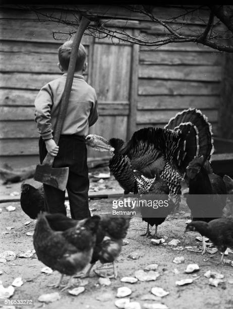 Thanksgiving Preparations. Boy holds an axe in a group of chickens and a turkey. Ca. 1930s.