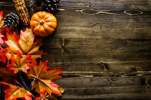 Thanksgiving Pumpkin Background 1041564352