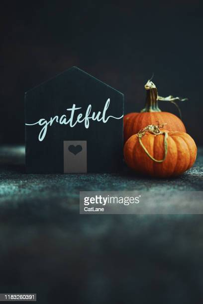 thanksgiving still life with house and pumpkins - thanksgiving cat stock pictures, royalty-free photos & images