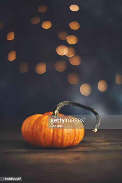 thanksgiving still life with miniature pumpkin - thanksgiving cat stock pictures, royalty-free photos & images