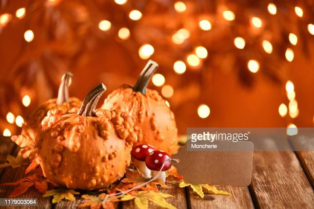 thanksgiving still life with pumpkins and greeting card on illuminated background and a rustic wooden table - thanksgiving wallpaper stock photos and pictures