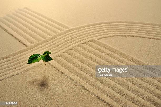 That plant and wave pattern in the sand pit