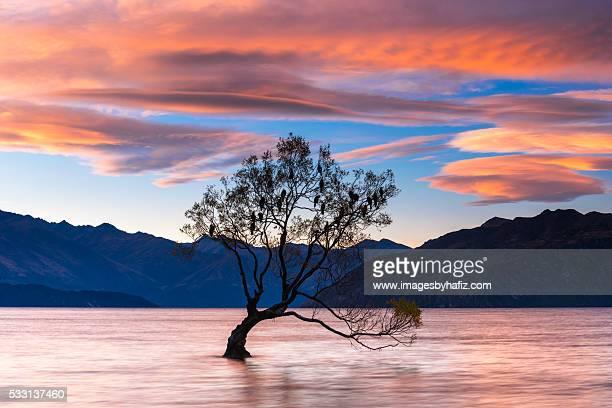 That Wanaka Tree at Lake Wanaka