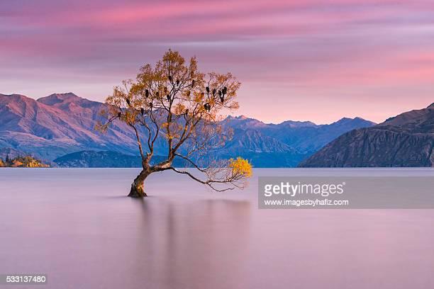that wanaka tree at lake wanaka - wanaka - fotografias e filmes do acervo