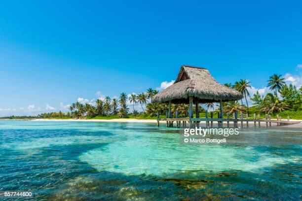 thatched beach hut in punta cana, dominican republic. - mar do caribe - fotografias e filmes do acervo