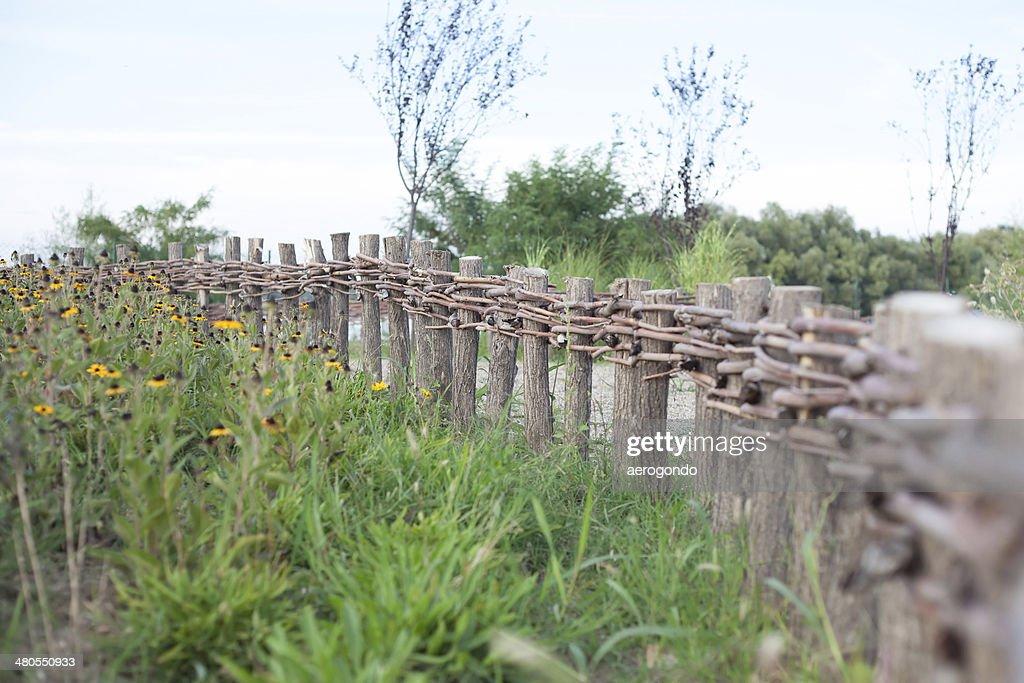 Vid junto a la valla : Foto de stock