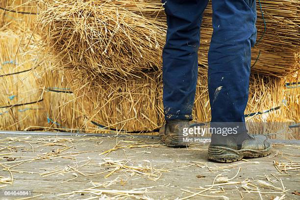 Thatcher standing beside bundles of straw used for thatching a roof.