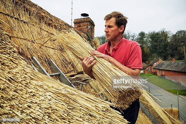 Thatcher standing on a roof, holding a yelm of straw.