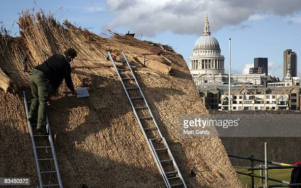 A thatcher working for Phil Campell Master Thatchers repairs part of thatched roof of the historic Globe Theatre on October 27 2008 in London England...