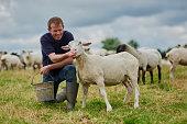 That's a good sheep