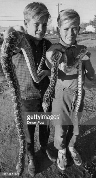 That's a Lot of Bull Snake Two Adams County youngsters went hunting Sunday in Sand Creek near the Oriental Oil Refinery and came back with two...