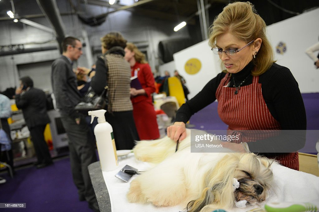 SHOW -- 'The 137th Annual Westminster Kennel Club Dog Show' at Pier 92 & 94 in New York City on Monday, February 11, 2013 -- Pictured: Behind the Scenes --