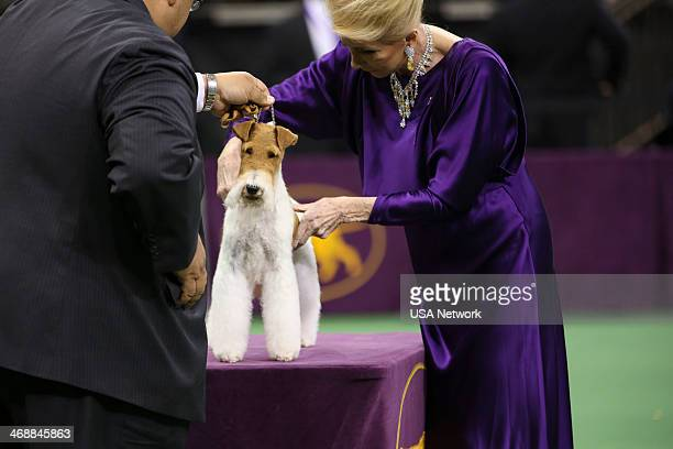 SHOW 'The 138th Annual Westminster Kennel Club Dog Show' Pictured Best In Show Sky Wire Fox Terrier at Madison Square Garden in New York City on...
