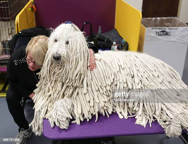 SHOW 'The 138th Annual Westminster Kennel Club Dog Show' Pictured Komondor backstage at Madison Square Garden in New York City on Monday February 11...