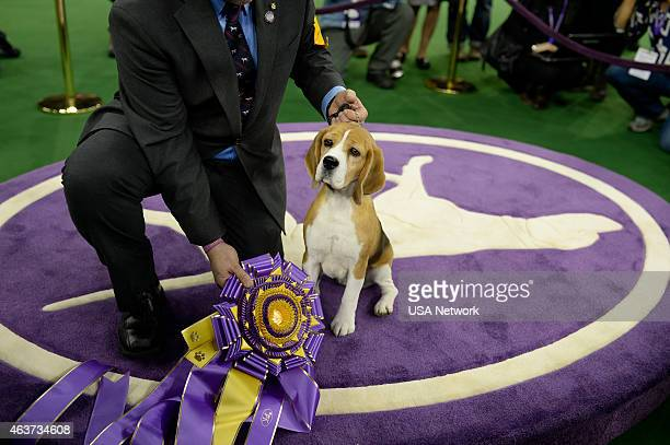 """The 139th Annual Westminster Kennel Club Dog Show"""" at Madison Square Garden in New York City on Tuesday, February 17, 2014 -- Pictured: Best in Show,..."""