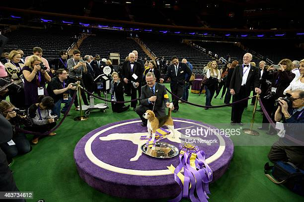 SHOW 'The 139th Annual Westminster Kennel Club Dog Show' at Madison Square Garden in New York City on Tuesday February 17 2014 Pictured Best in Show...