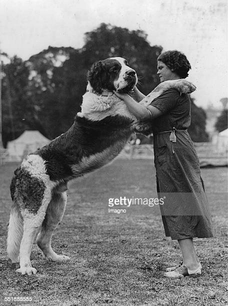 The 13monthold Saint Bernard dog of Mrs J Gardiner of Bath already weighs 18 stone About 1935 Photograph