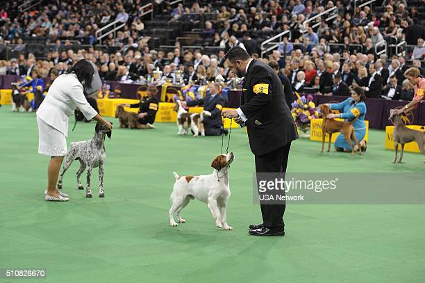 SHOW The 140th Annual Westminster Kennel Club Dog Show at Madison Square Garden in New York City on Tuesday February 16 2016 Pictured German...