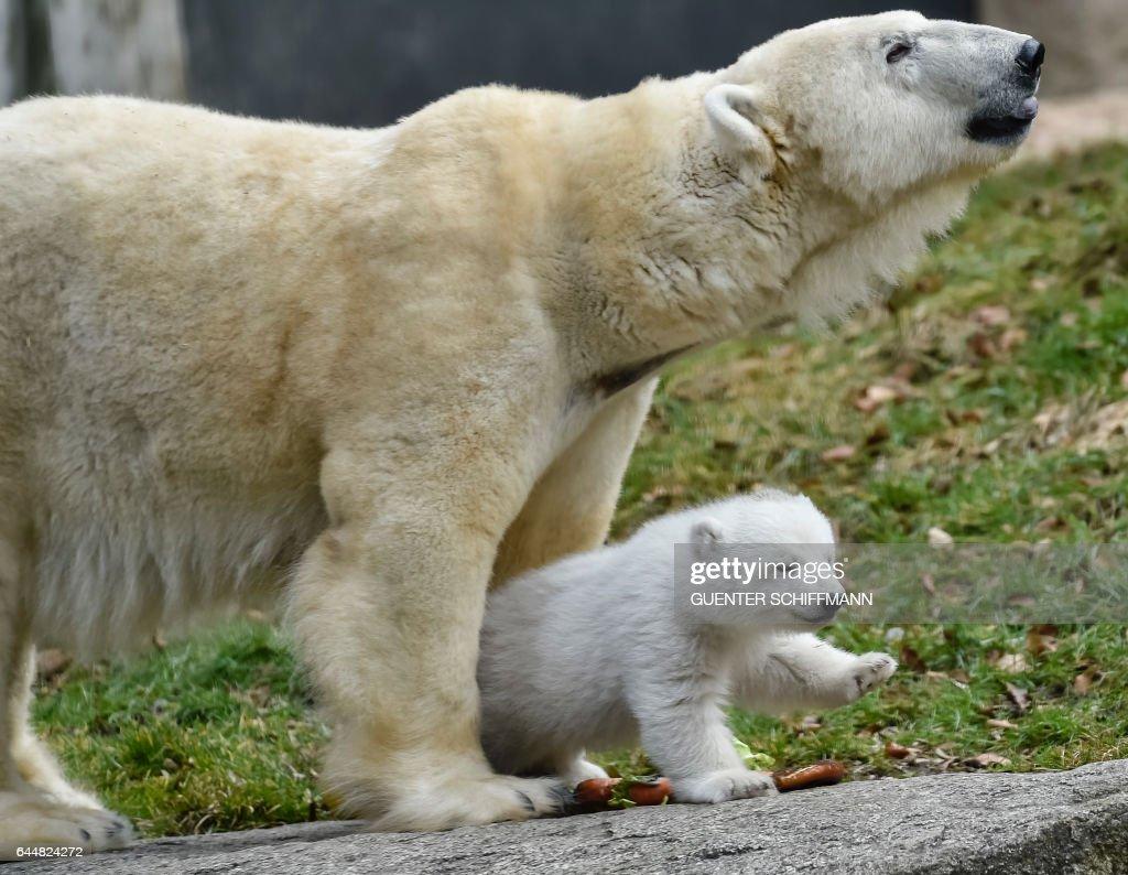 GERMANY-ANIMALS : News Photo