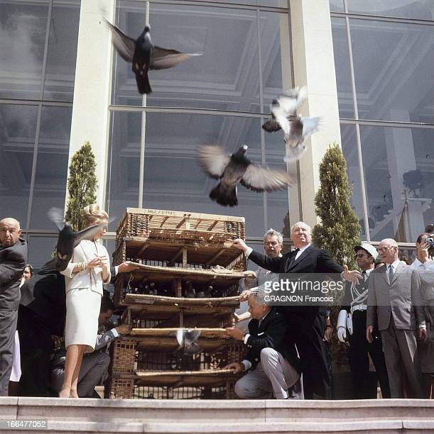 The 16Th Cannes Film Festival 1963 Presentation Of The Film Of 'Les Oiseaux' By Alfred Hitchcock Le 16ème Festival de CANNES se déroule du 9 au 23...