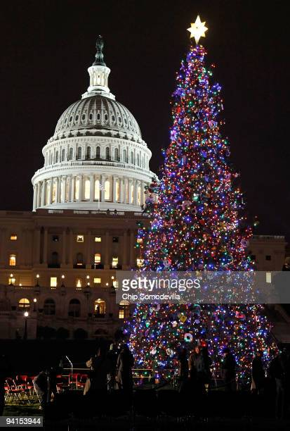 The 2009 US Capitol Christmas tree a 85foot blue spruce from the ApacheSitgreaves National Forest in Arizona was lit December 8 2009 in Washington DC...
