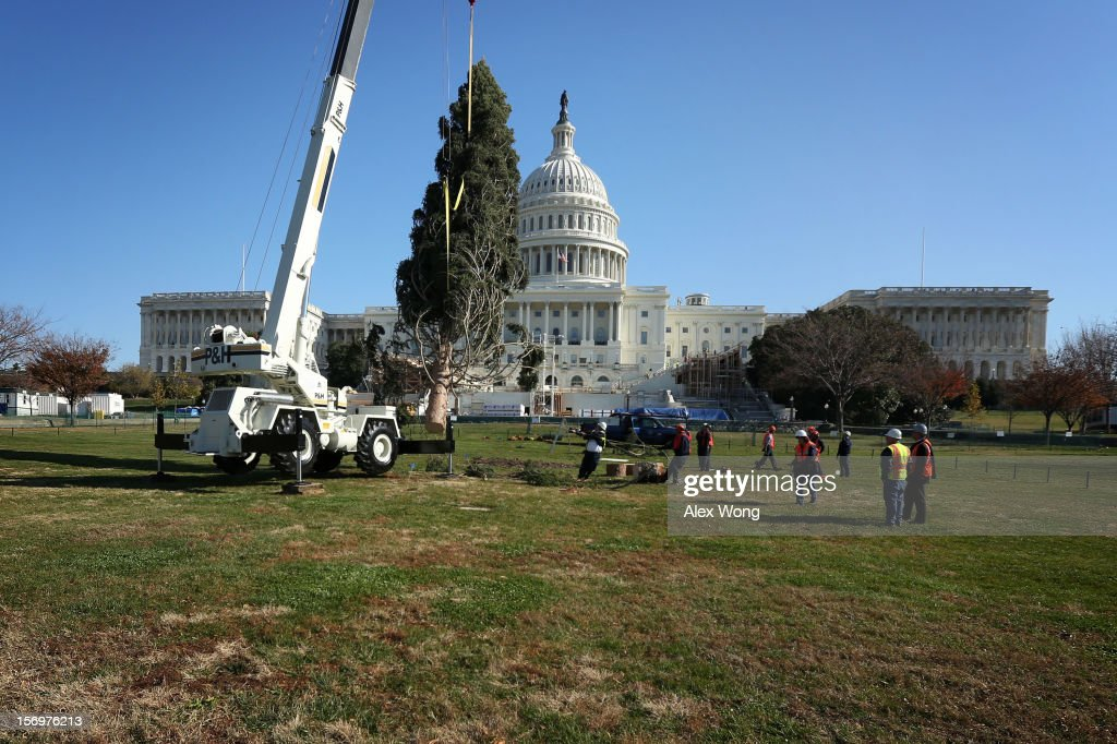 The 2012 U.S. Capitol Christmas Tree is set up by crew members of the Architect of the Capitol November 26, 2012 on Capitol Hill in Washington, DC. The year's tree is a 65-foot Engelmann spruce from the Blanco Ranger District of the White River National Forest in Colorado. The tree will be lit by Speaker of the House Rep. John Boehner (R-OH) during a ceremony on December 4.