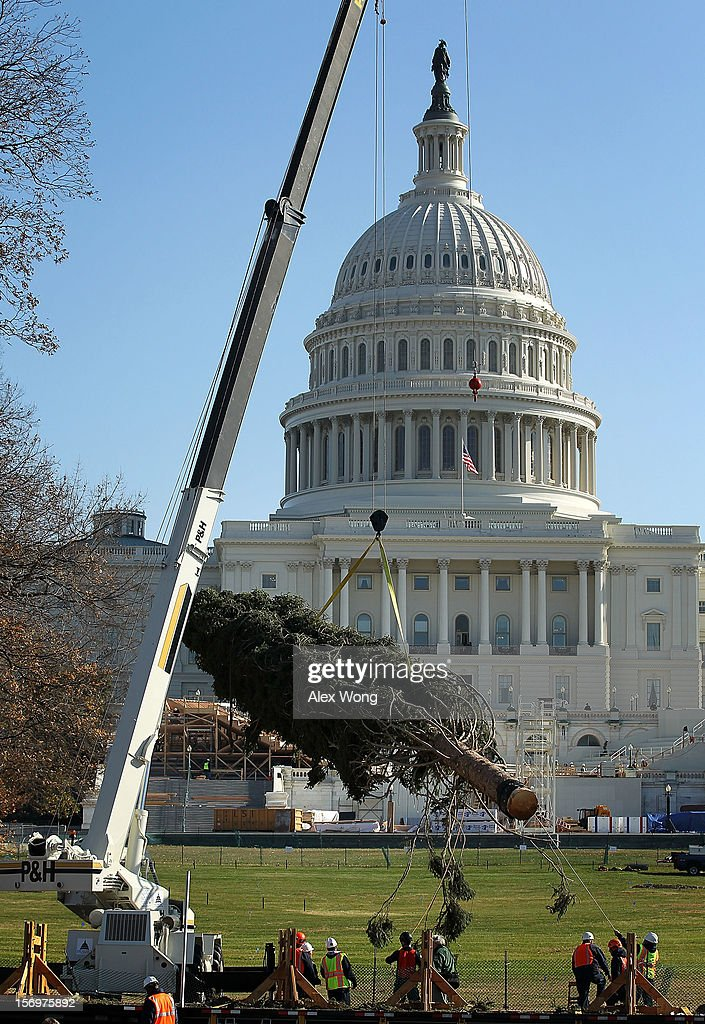 The 2012 U.S. Capitol Christmas Tree is unloaded from a tractor trailer by crew members of the Architect of the Capitol November 26, 2012 on Capitol Hill in Washington, DC. The year's tree is a 65-foot Engelmann spruce from the Blanco Ranger District of the White River National Forest in Colorado. The tree will be lit by Speaker of the House Rep. John Boehner (R-OH) during a ceremony on December 4.